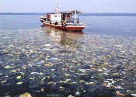 Sampah Plastik di Laut Pengaruhi Kualitas Ikan