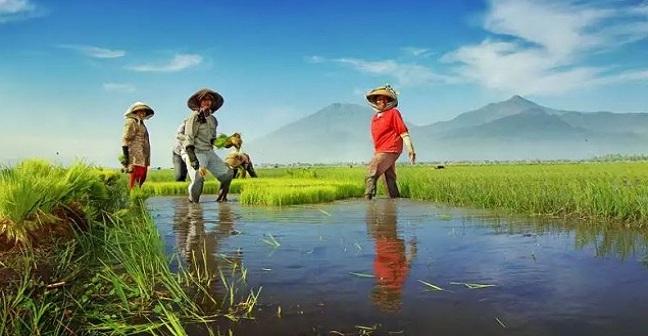 Presiden Baru Untuk Daulat Pertanian Perkebunan Dan Pangan The