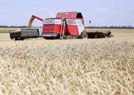 Impor Gandum Indonesia dari Ukraina, Ketahanan Pangan dalam Bahaya
