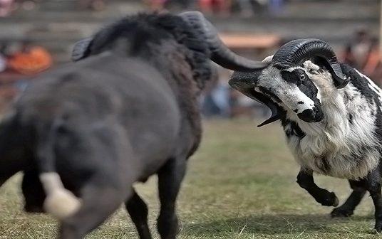 Antara Tolikara, Singkil dan Garut itu Satu Tarikan Adu Domba